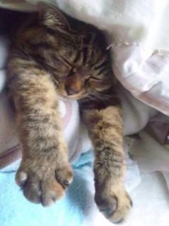 【猫】-愛知風俗嬢